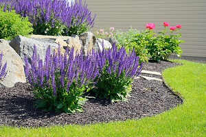 Getting Your Landscape Ready for Spring