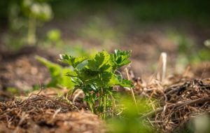 Best Practices for Mulching in Long Green