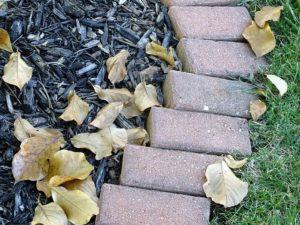 Seasonal Benefits of Mulch in Kingsville