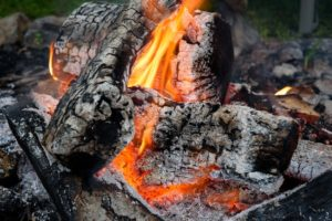 Using Firewood Ash for Gardening in Towson