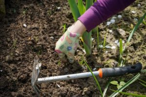 Tips for Maryland Homeowners: June Gardening To-Do List