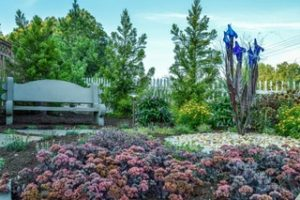 July Gardening To-Do List for Maryland Homeowners