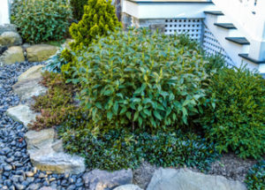Keeping Plants Hydrated with Natural Stone and Other Drainage Solutions