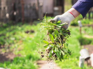 Keep Weeds at Bay with Landscape Materials from Lehnhoff's Supply