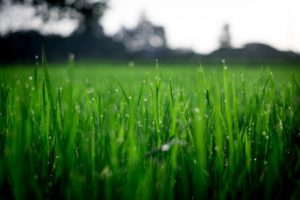 Grab Some Topsoil and Regrade Your Yard Ahead of Fall Turf Season